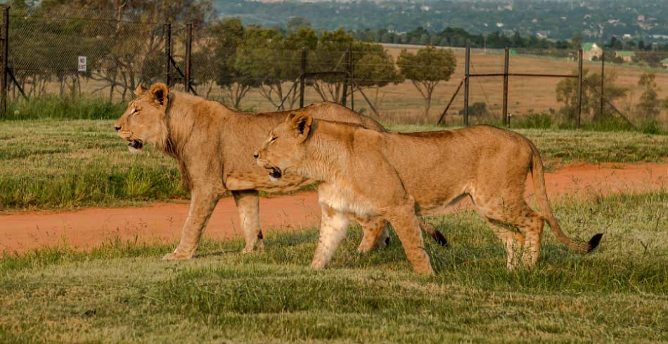 Big 5 game reserve in the city