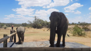 Adventures with Elephants - Lerato Lefafa